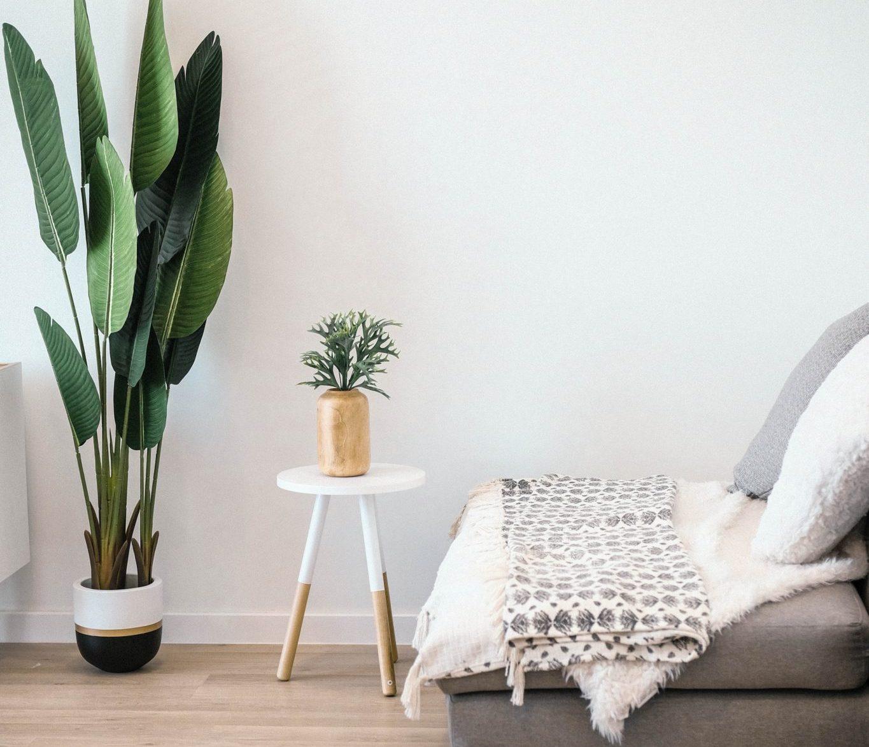 Stol og grønn plante